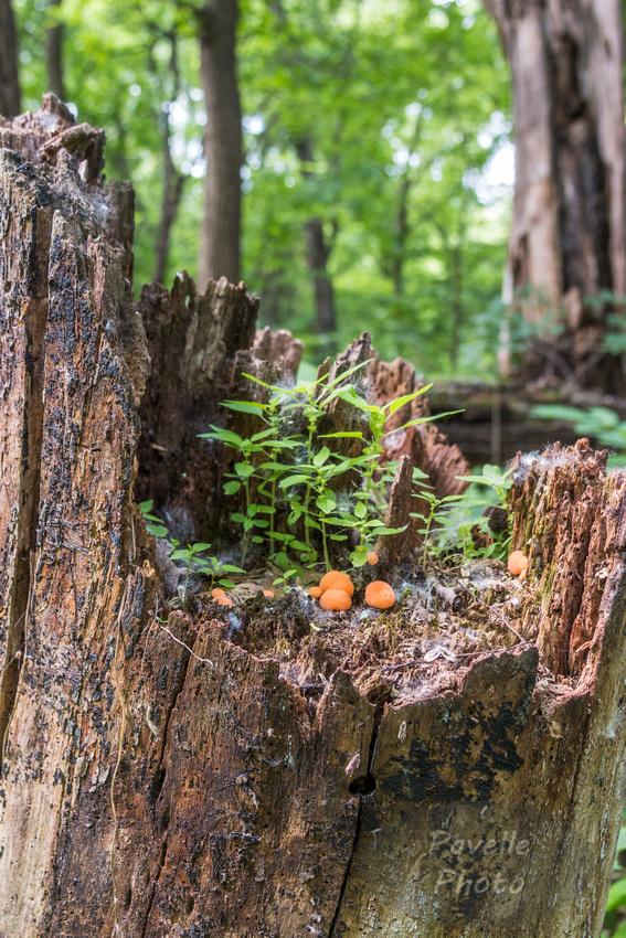 Stump-scape