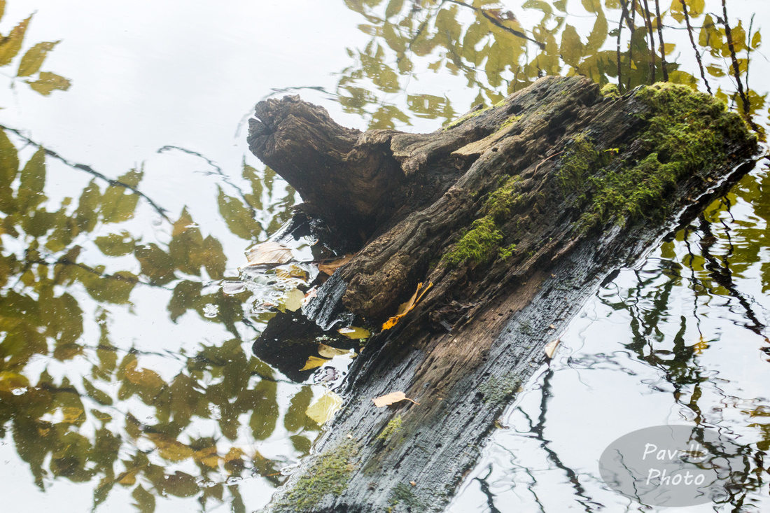 Stump with Reflections