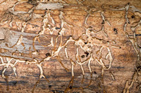 Natural Pictograph