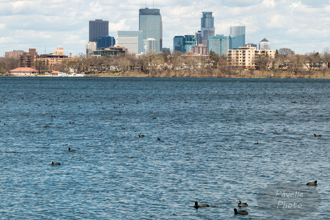 Minneapolis and coots