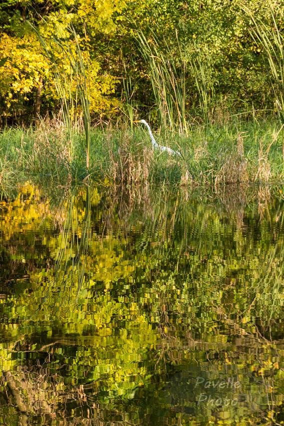 Hidden Egret